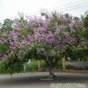 cay-mong-bo-tim-2